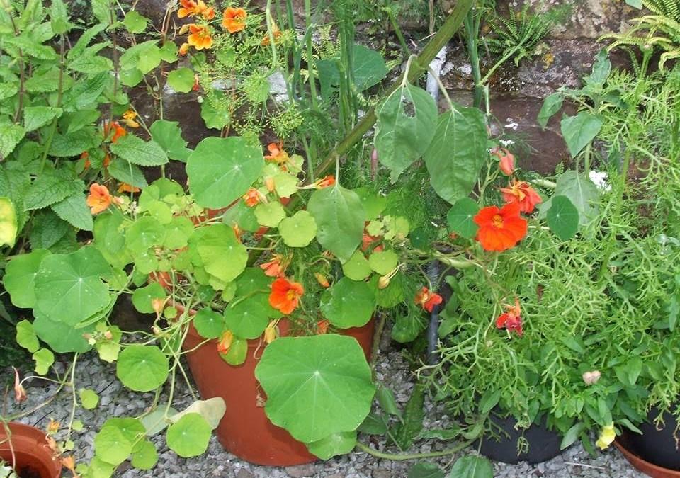 Herbal Heritage