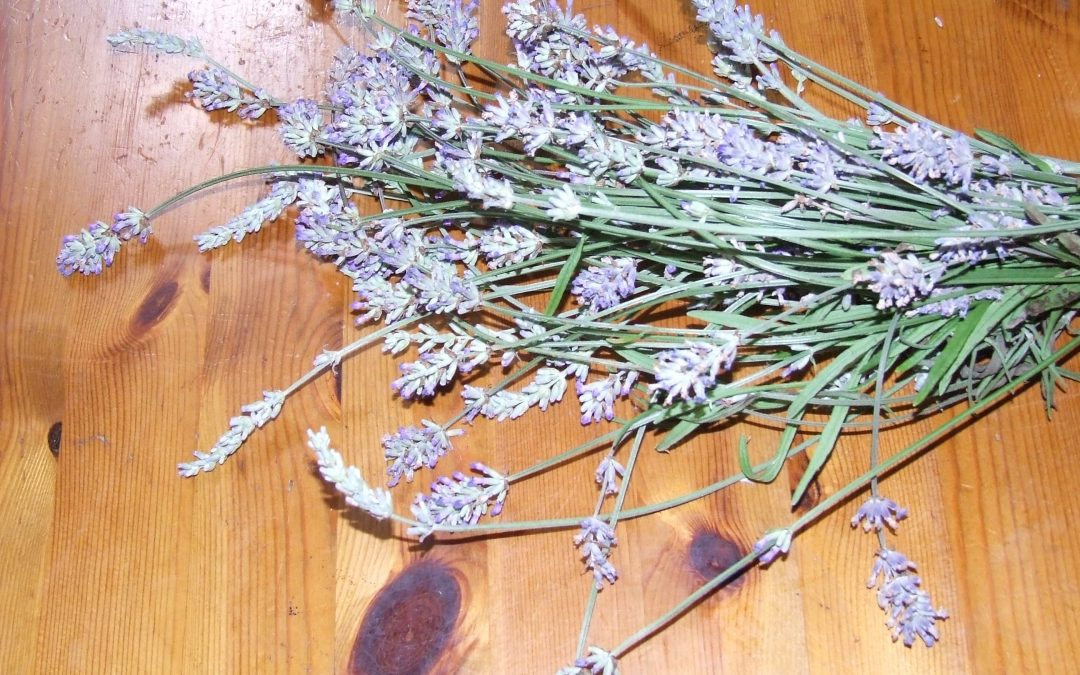 RE-ESTABLISHING GOOD VAGAL TONE AND BALANCE WITH HERBS